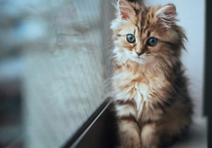 cat-na-okne